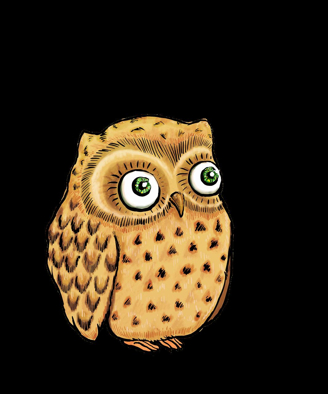 1066x1280 owl, cute owl, owl illustration, owl drawing, bird
