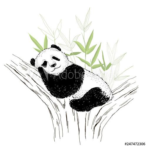 500x500 Cute Panda Bear Sleeping On The Tree Vector Illustration Isolated
