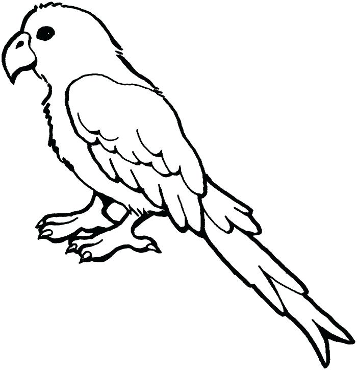 700x725 parrot colouring pictures parrot colouring parrot colouring