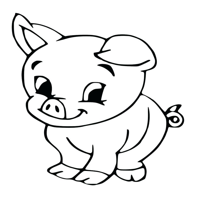800x800 How To Draw A Baby Pig Cute Bunny Drawing Baby