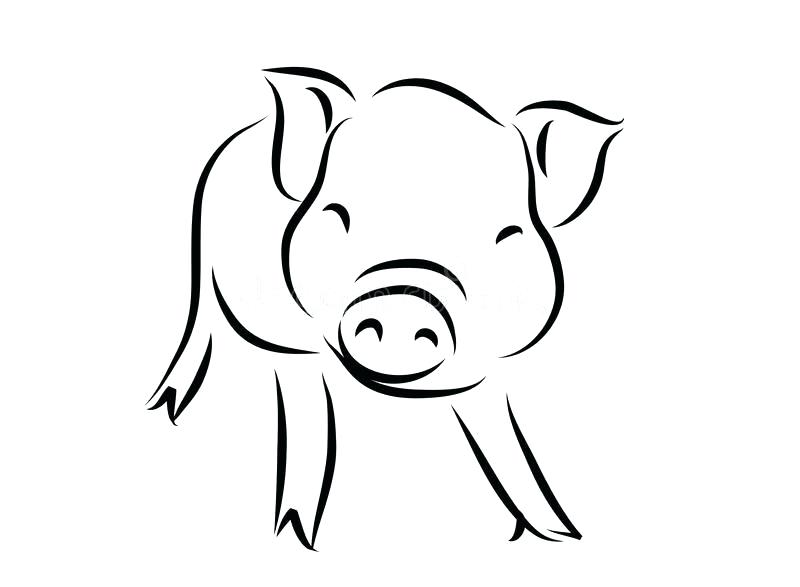 800x587 outline of a pig animal outline for cute pig outline pig tattoo