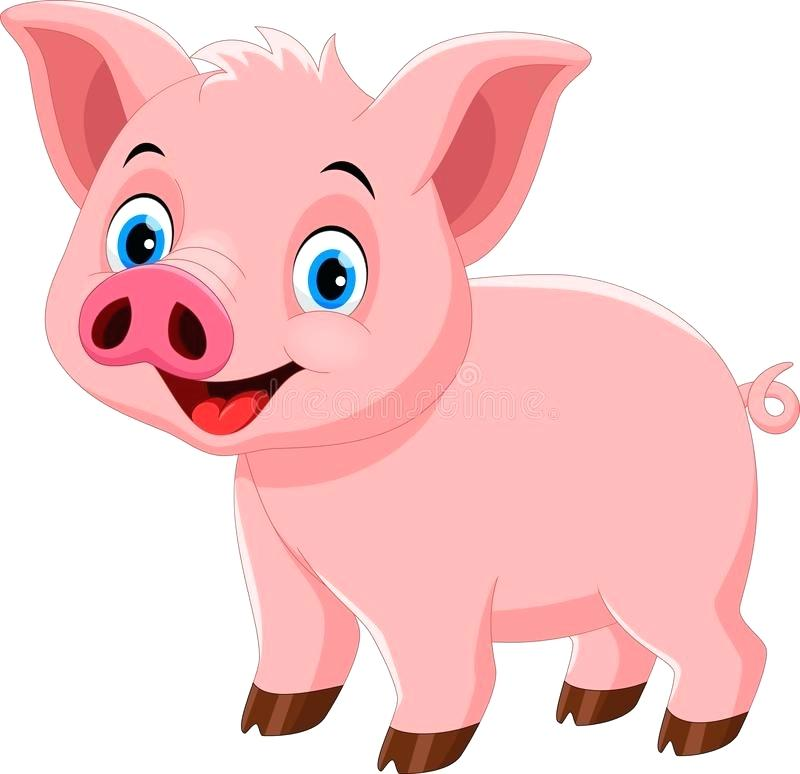 800x774 Pig Drawing Cartoon Download Cute Pig Cartoon Isolated On White