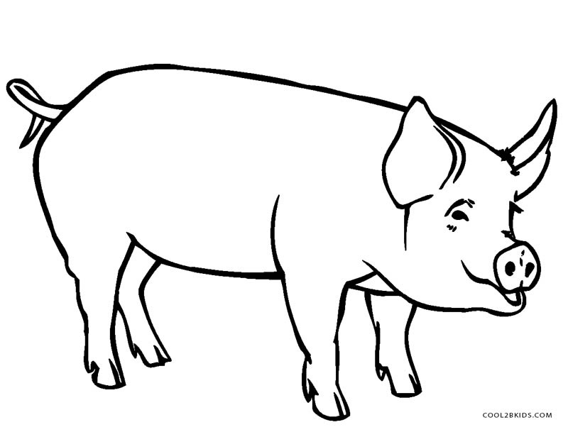 800x609 Pig Drawing For Kids