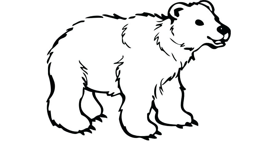900x460 polar bear black and white clipart black bear polar bear brown