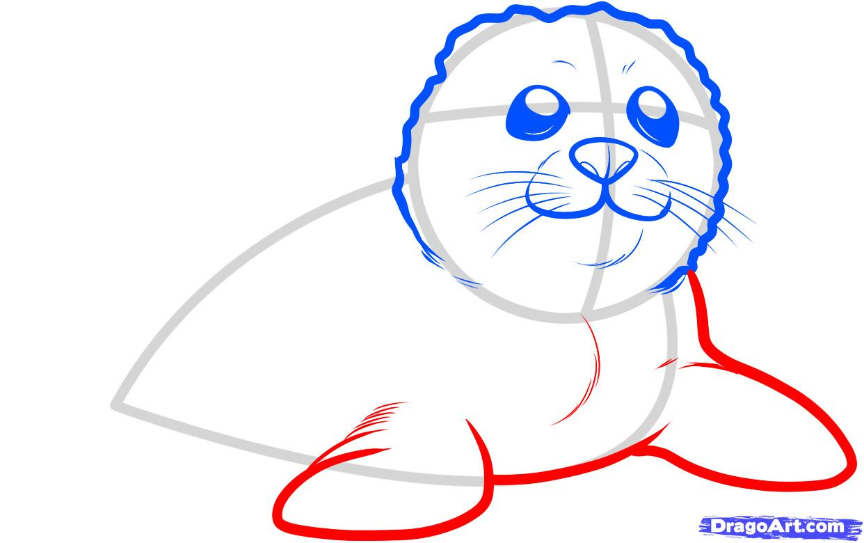 1242x780 draw a seal pup, seal pup, step