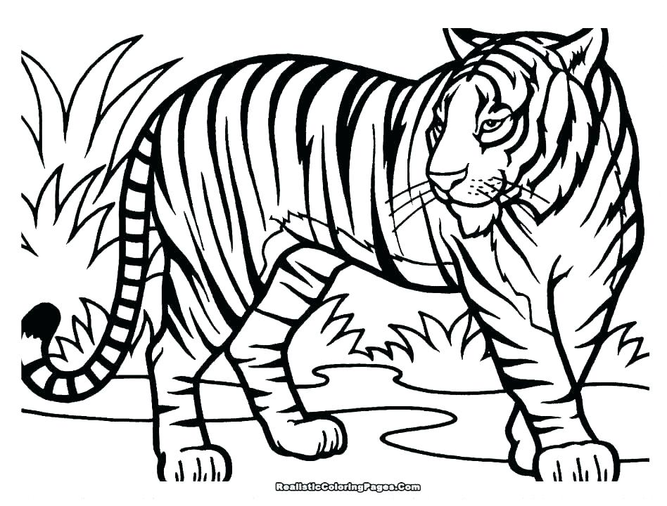 948x720 How To Draw Coloring Cute Tiger Image Coloring Pages