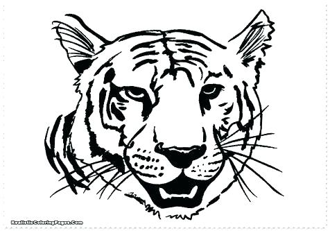476x333 Tiger Without Stripes Coloring