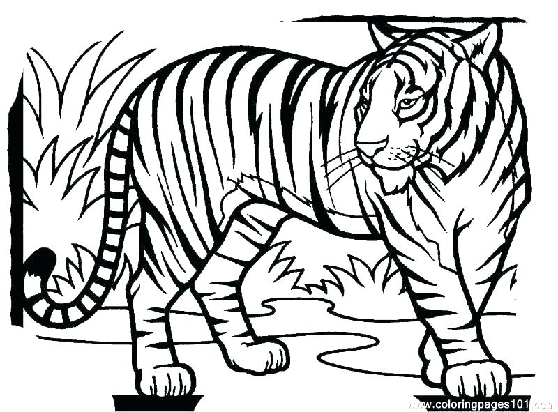 800x591 Coloring Pages For Kids Summer Disney Moana Adults Cute Tiger Lion