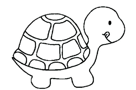 576x381 Turtle Drawing Zupa