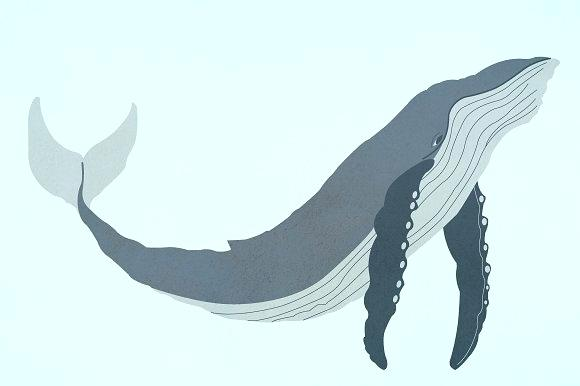 580x386 drawn whale drawn whale minimalist cute drawn whale zupa