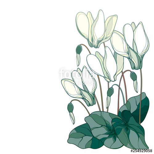 500x500 vector corner bouquet with outline pink cyclamen or alpine violet