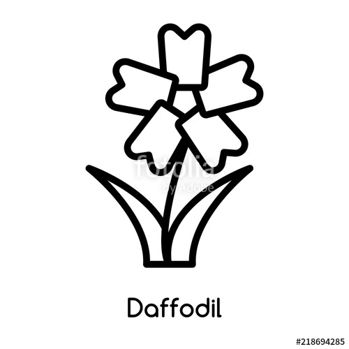 500x500 daffodil icon vector isolated on white background, daffodil sign
