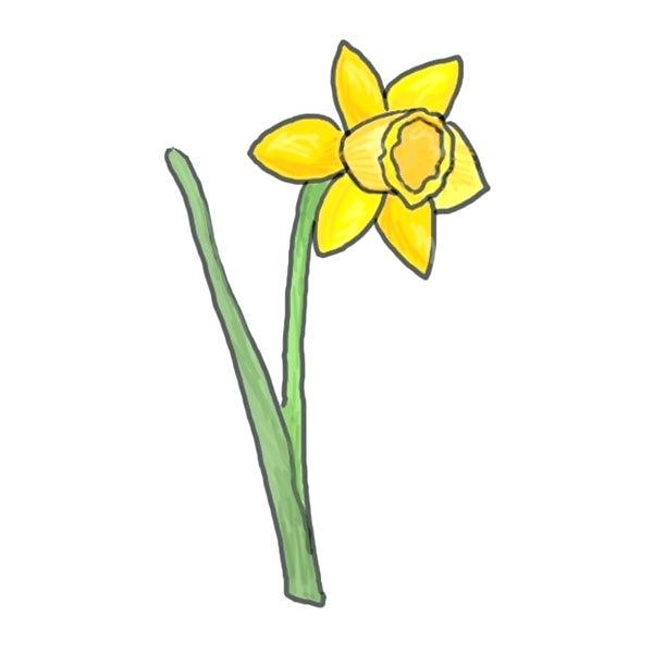 600x600 how to draw a daffodil daffodil draw easy way to draw daffodils