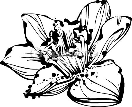 450x365 narcissus flower tattoo outline drawing painting birth