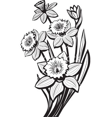 380x400 sketch of narcissus flowers vector botanical narcissus flower