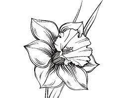 254x199 image result for narcissus drawing flowers roses plants