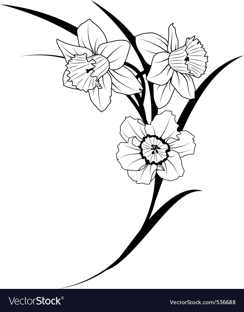 843x1080 narcissus flower drawing weekly doodles and tuts how to draw