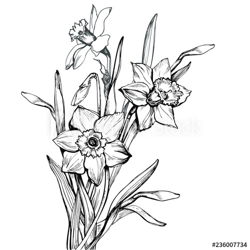 500x500 bouquet with hand drawn flowers narcissus, daffodils isolated