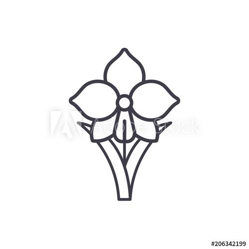 500x500 daffodil line icon, vector illustration daffodil flat concept