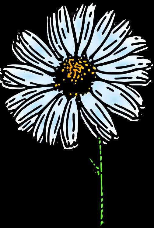 506x750 Flower Common Daisy Drawing Daisy Family Nature Story Cc0