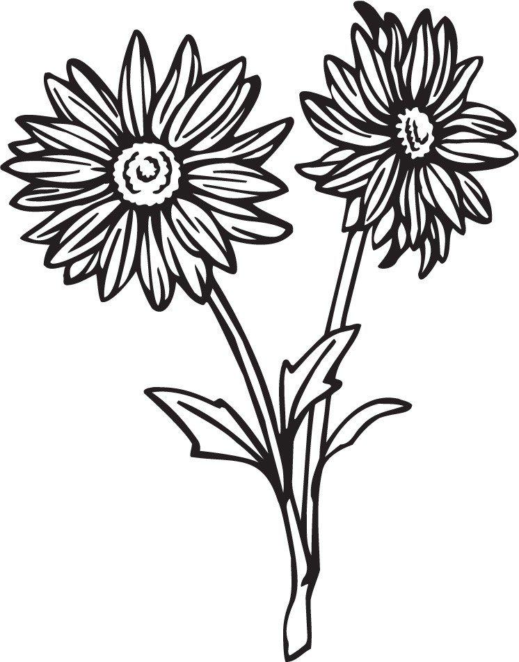 746x951 Gerber Daisy Drawing