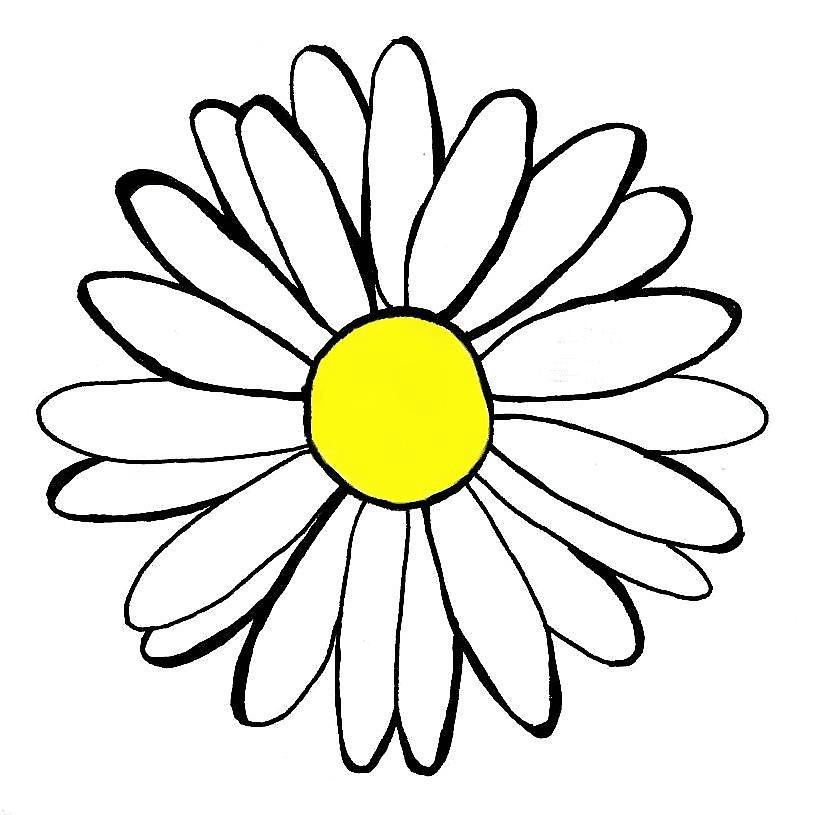 815x815 Daisy Drawing