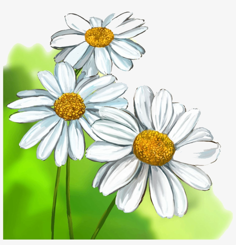 820x852 Collection Of Free Daisies Drawing Watercolour Download