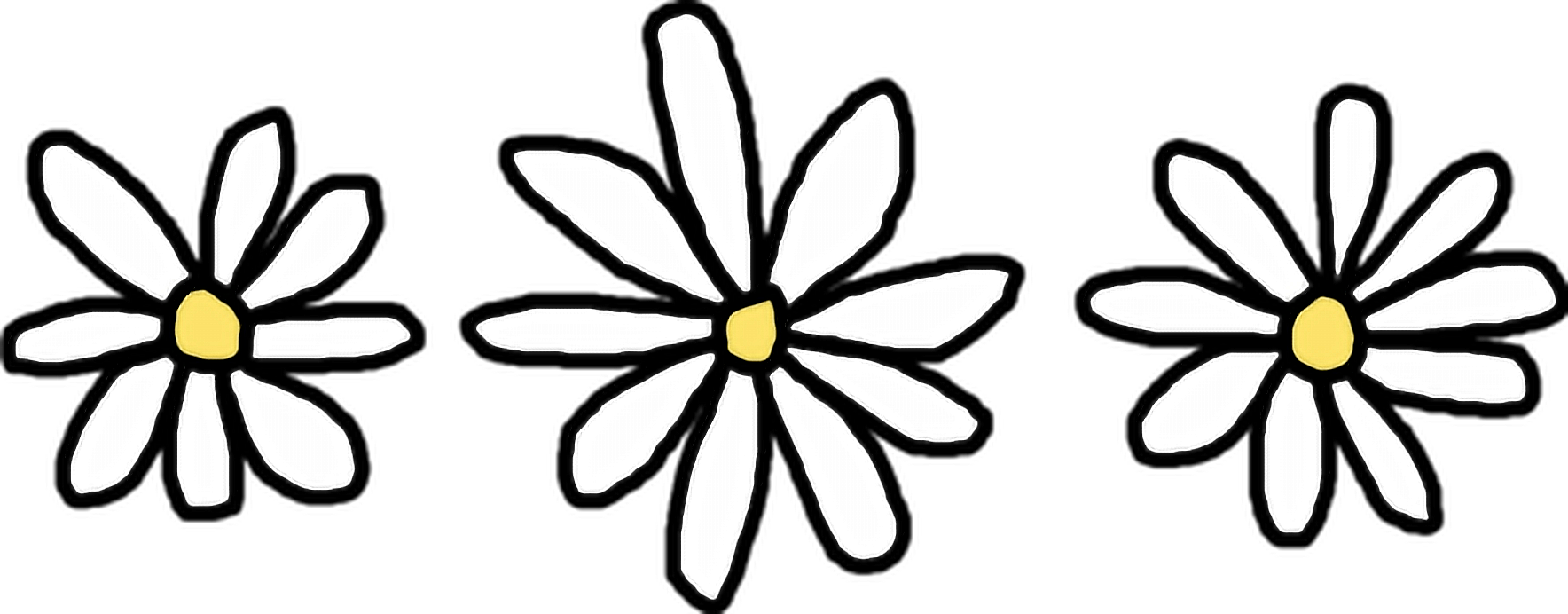 1768x692 Collection Of Free Daisies Drawing Basic Download On Ui Ex