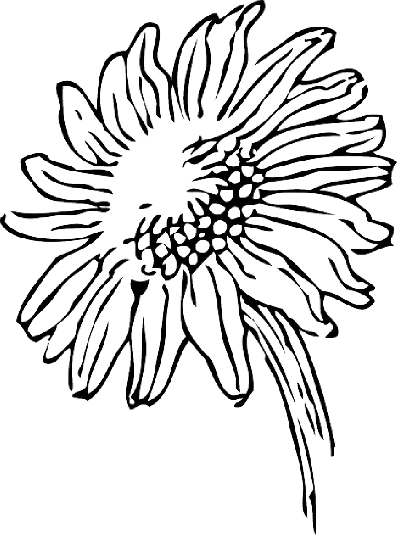 Daisy Drawing Outline