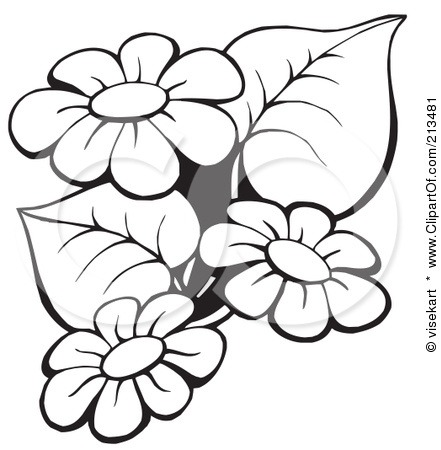 441x450 Daisy Flower Drawing Outline