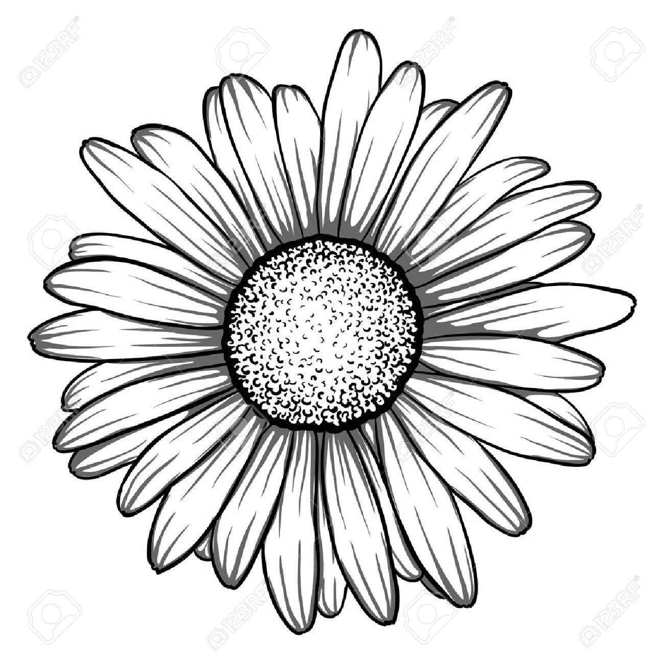 1300x1300 Daisy Flower Outline