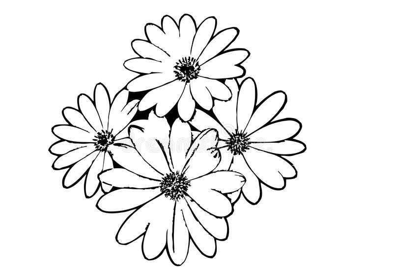 800x565 Flower Outline Drawing Of Flowers At Getdrawings Com Free