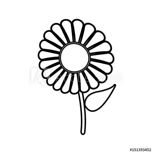 500x500 Beautiful Single Daisy Flower Outline Vector Illustration