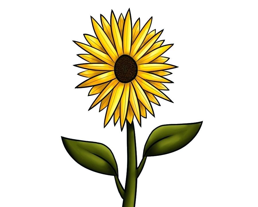 900x720 Sunflower To Draw Sunflower Drawing Tutorial