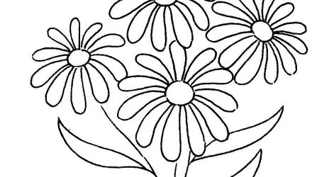 471x250 Daisy Flower Pencil Drawing Yellow Realistic Vector Images