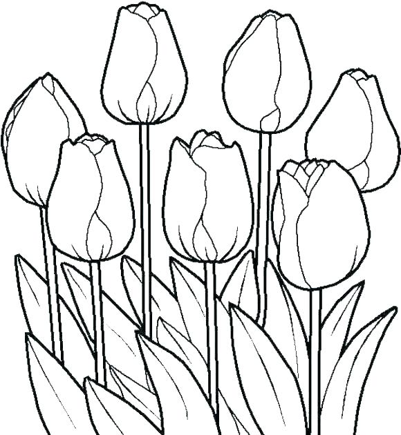 580x630 Garden Flowers Coloring Pages Of Daisy Flower
