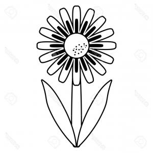 300x300 Daisy Floral Botany Collection Sketch Daisy Flower Drawings Black