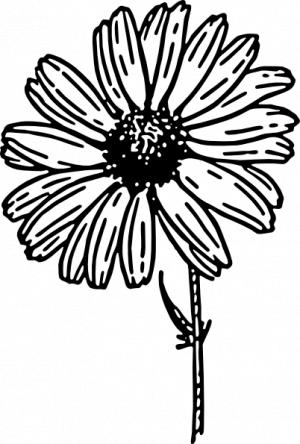 300x444 Daisy Line Clipart