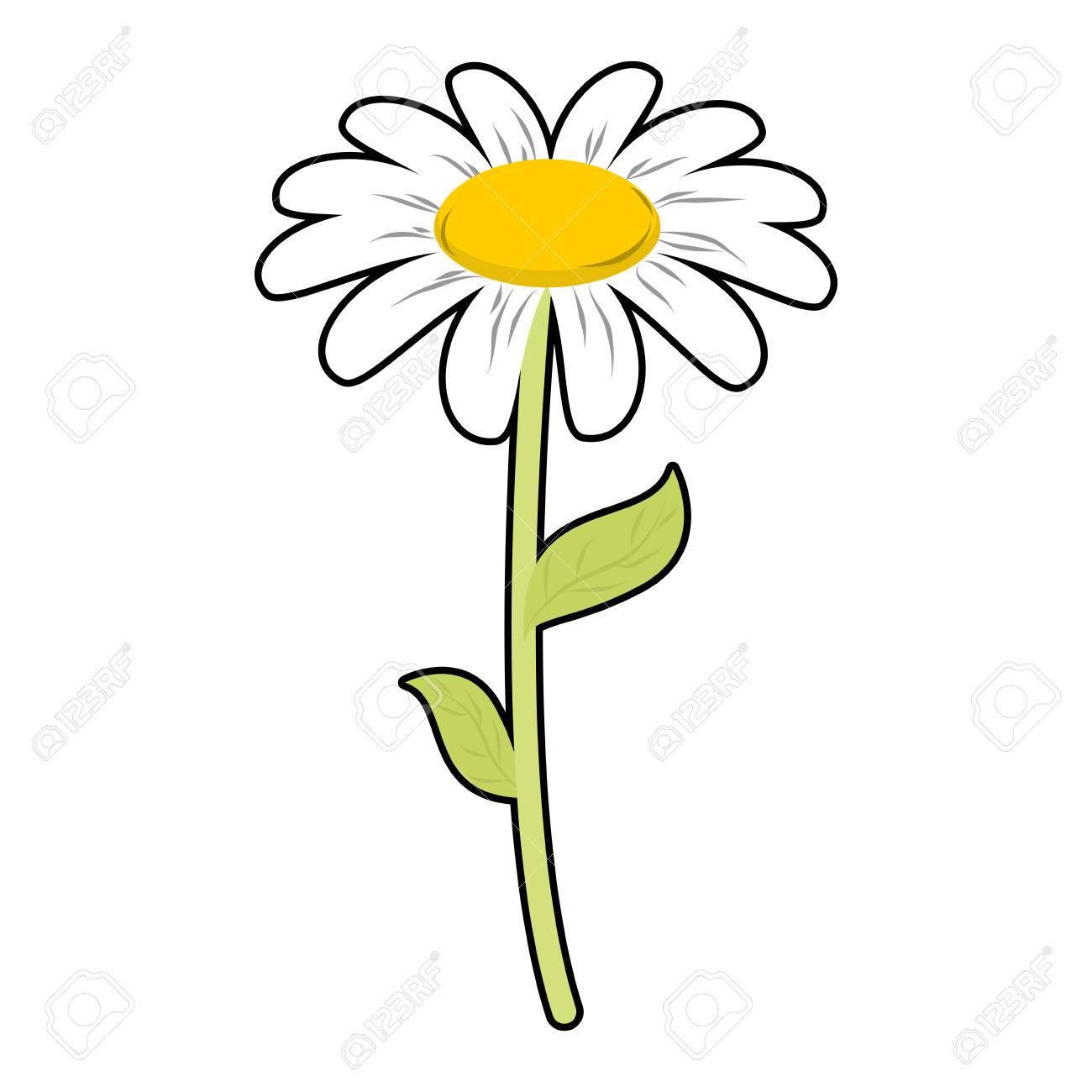 1300x1300 Daisy Long Stem Flower Fun Pics Images
