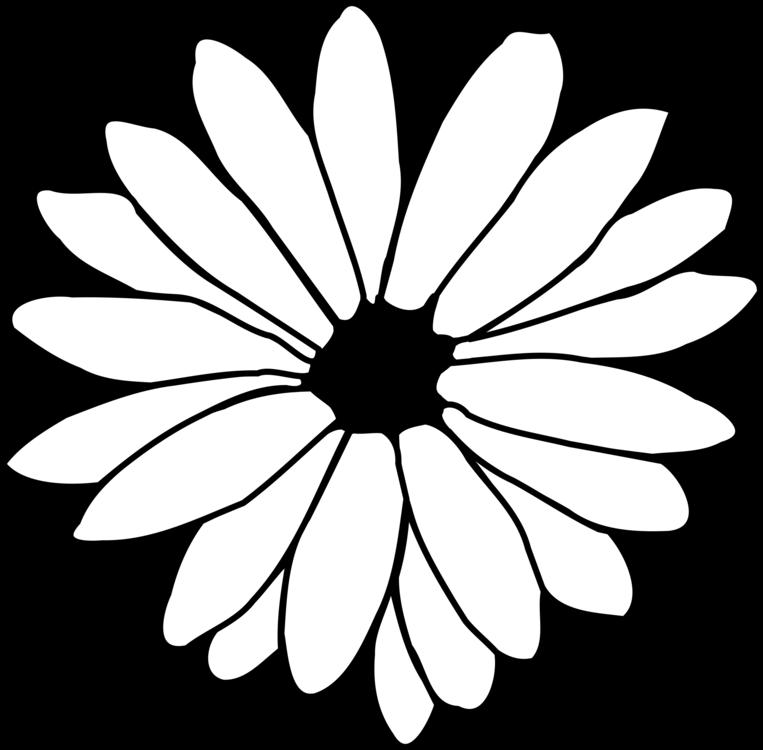 763x750 Flower Drawing Common Daisy Line Art Petal Cc0