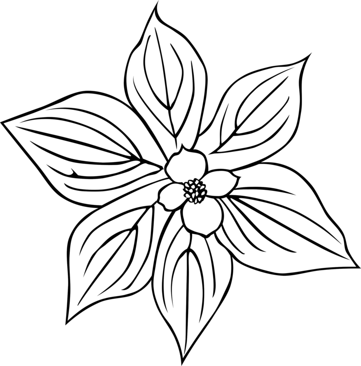 741x750 Petal Drawing Daisy Transparent Png Clipart Free Download