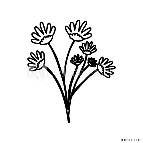 500x500 Sketch Contour Of Hand Drawing Daisy Flower Bouquet With Several