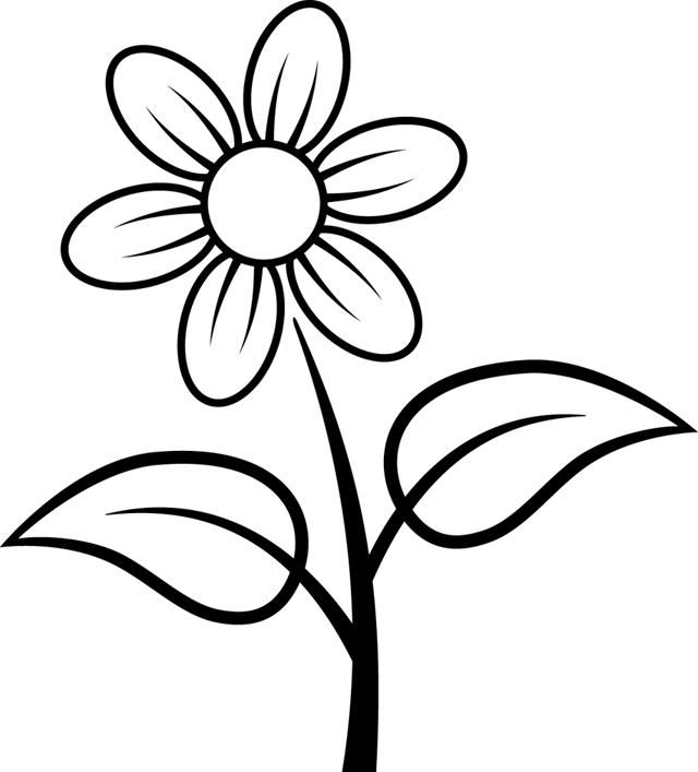 640x707 Daisy