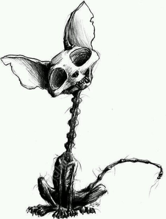 546x720 Dead Kitty Cat Tattoos Creepy Drawings, Art, Art Drawings
