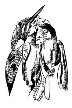 236x354 Best Dead Birds Images In Birds, Bird Art, Feather