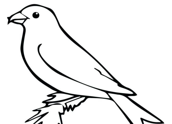 728x526 Cockatiel Bird Coloring Pages Parrot