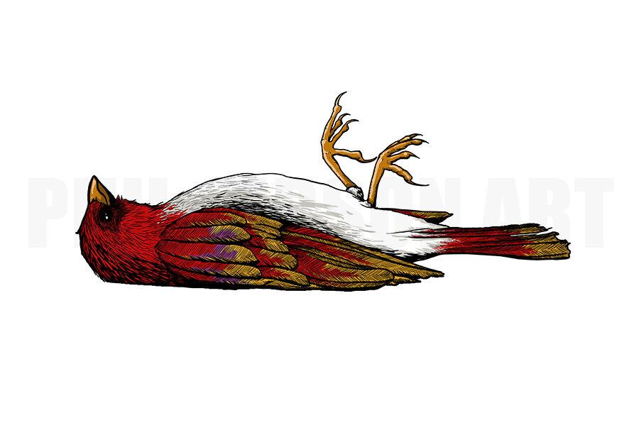 900x599 Original Wax Wings Dead Bird Art Print Poster Cardinal Finch