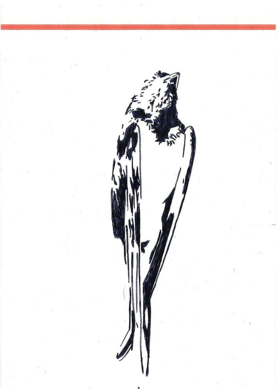 952x1339 roxanne goffin, taxidermy, dead bird, pen drawing dead birds