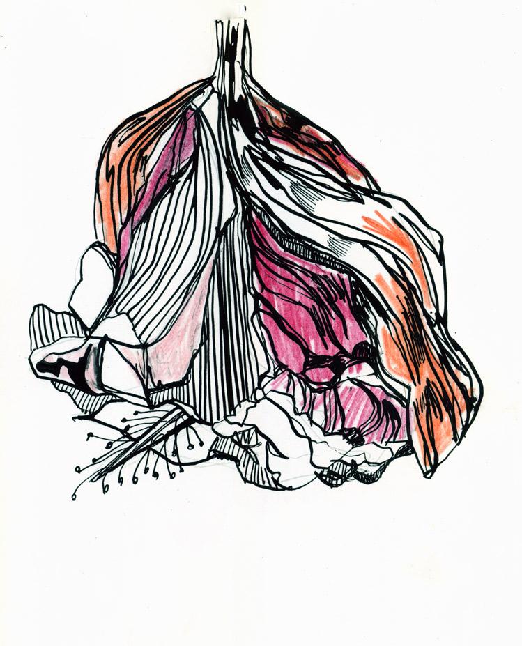 749x927 mc drawn dead flower sketch watercolour pencil, ink nib