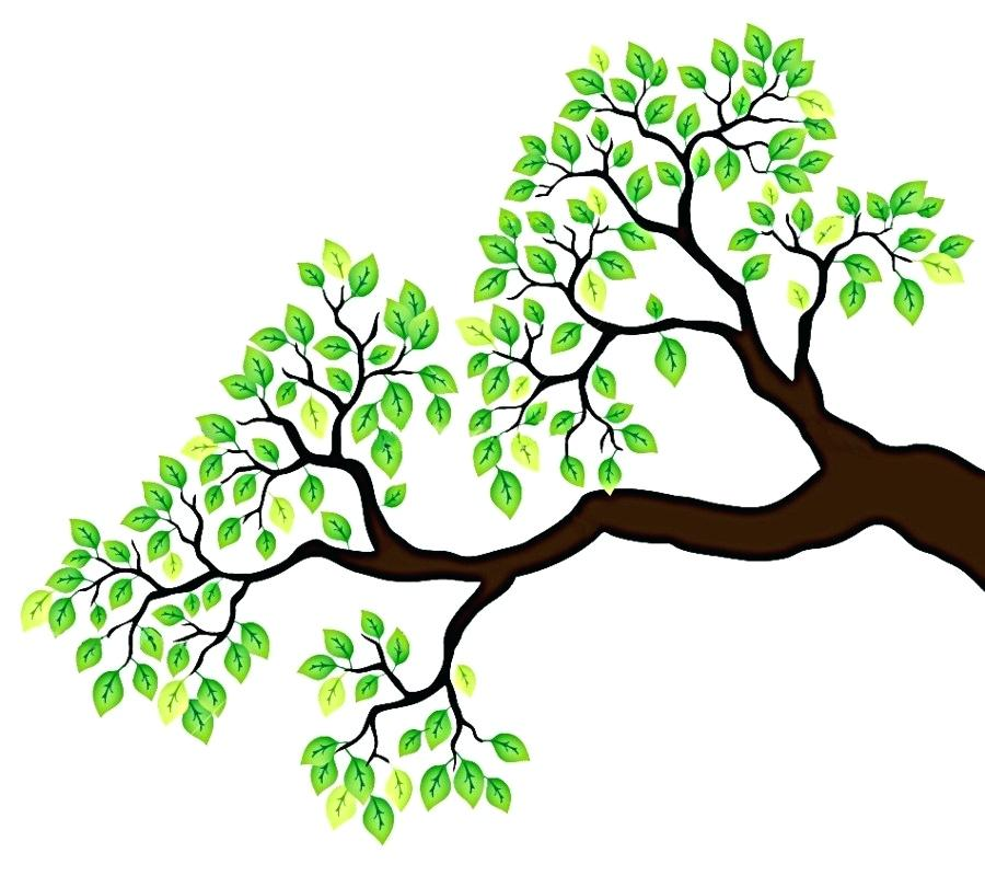 900x800 drawing tree branches branch tree drawing clip art branches